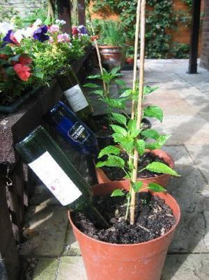 Para mantener las plantas regadas